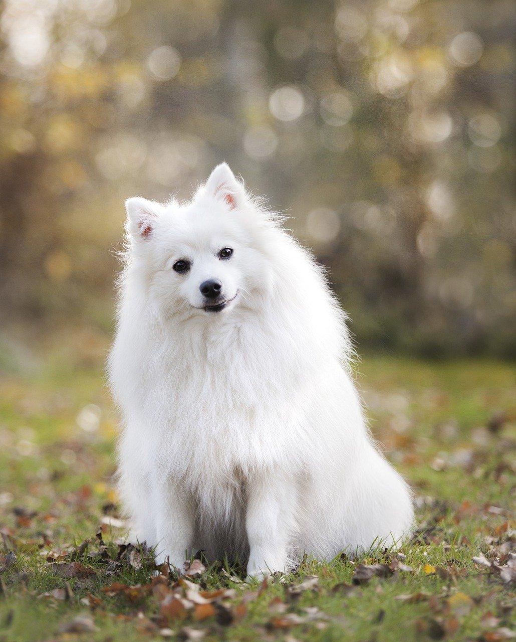 dog, puppy, canine