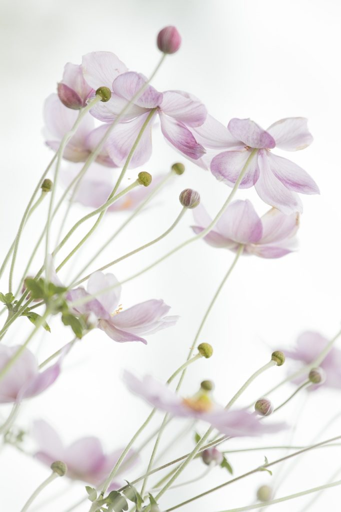 flowers, petals, buds